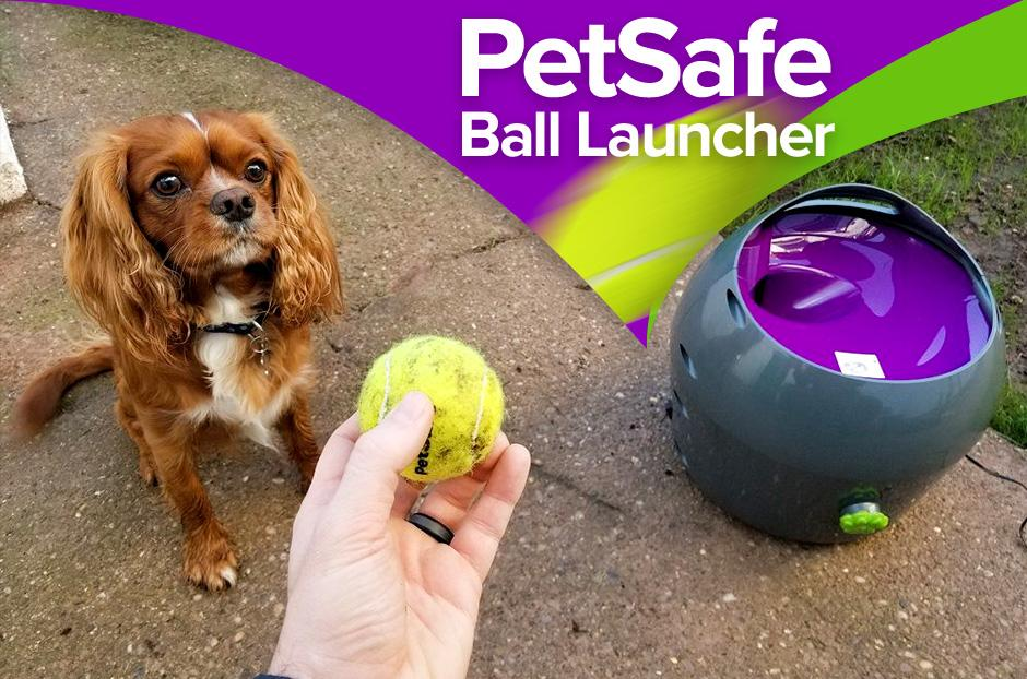 petsafe automatic ball luncher