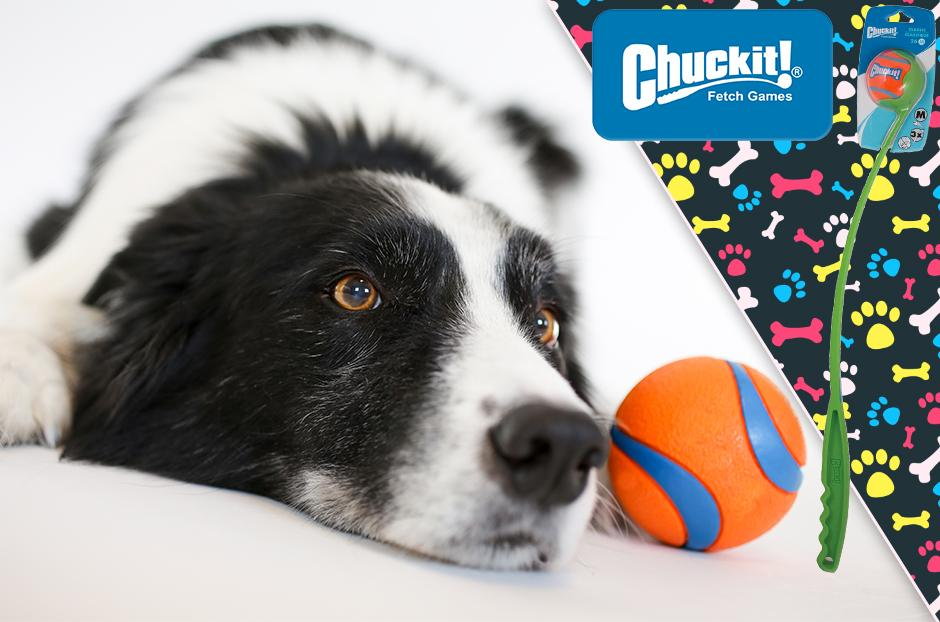 Review & Keep Chuck It Dog Toy